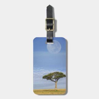 Umbrella Thorn Acacia, Acacia tortilis, and Travel Bag Tag