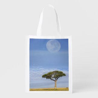 Umbrella Thorn Acacia, Acacia tortilis, and Reusable Grocery Bag