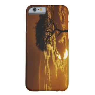 Umbrella Thorn Acacia, Acacia tortilis, Barely There iPhone 6 Case