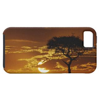 Umbrella Thorn Acacia, Acacia tortilis, iPhone SE/5/5s Case