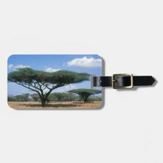 Umbrella Thorn Acacia (Acacia tortilis), Mkuze Bag Tags