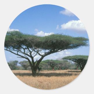 Umbrella Thorn Acacia (Acacia tortilis), Mkuze Classic Round Sticker