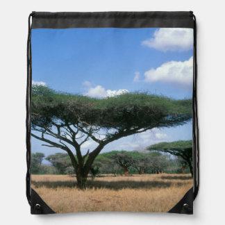 Umbrella Thorn Acacia (Acacia tortilis), Mkuze Backpacks