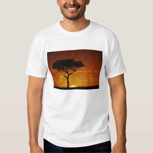 Umbrella Thorn Acacia, Acacia tortilis, T-shirt