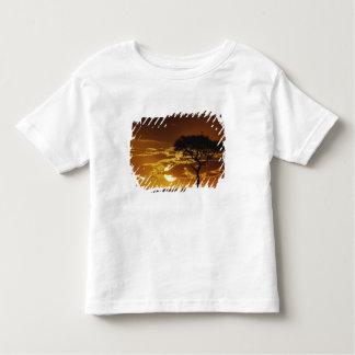 Umbrella Thorn Acacia, Acacia tortilis, Tee Shirt