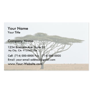 Umbrella Thorn Acacia Tree Double-Sided Standard Business Cards (Pack Of 100)