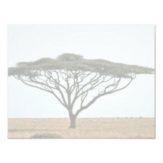 Umbrella Thorn Acacia Tree Card