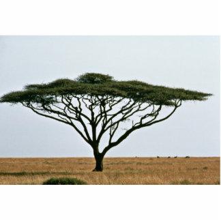 Umbrella Thorn Acacia Tree Cutout