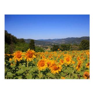 Umbrian Countryside Postcard