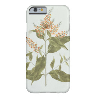 Umtar (Buddleia polystachya) (w/c over graphite on Barely There iPhone 6 Case