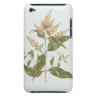 Umtar (Buddleia polystachya) (w/c over graphite on iPod Touch Case-Mate Case