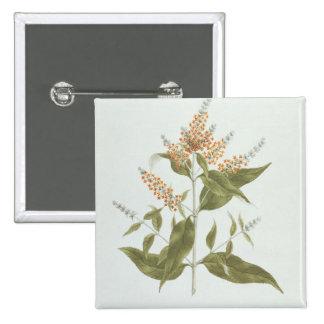 Umtar (Buddleia polystachya) (w/c over graphite on Pinback Button