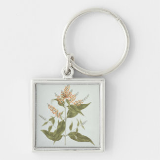 Umtar (Buddleia polystachya) (w/c over graphite on Silver-Colored Square Keychain