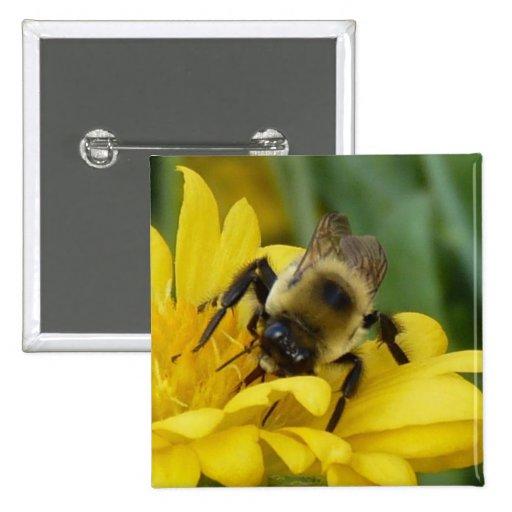 Un abejorro pins
