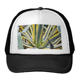 Un agavo no azul del cactus del agavo sin embargo gorros bordados