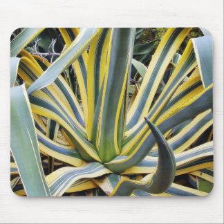 Un agavo no azul del cactus del agavo sin embargo alfombrilla de ratón
