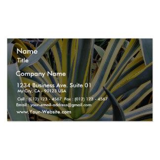 Un agavo no azul del cactus del agavo sin embargo tarjetas de visita