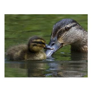 Un amor de madre tarjeta postal