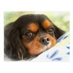 Un amor no tiene gusto de ningún otro perro de agu postales