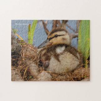 Un anadón precoz del pato silvestre puzzles