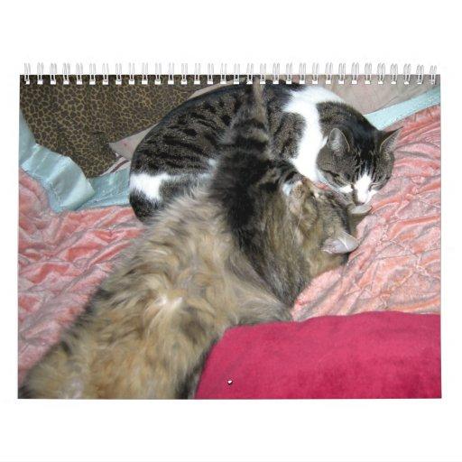 Un año de gatos del gatito calendario