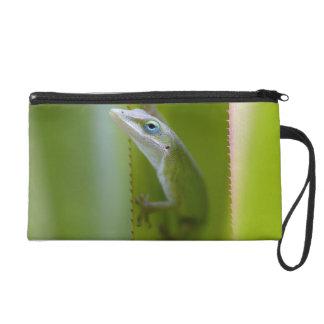 Un anole verde es un lagarto arbóreo
