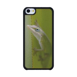 Un anole verde es un lagarto arbóreo funda de iPhone 5C slim arce