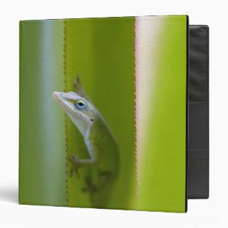 """Un anole verde es un lagarto arbóreo carpeta 1 1/2"""""""
