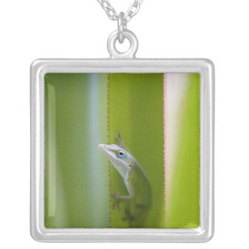 Un anole verde es un lagarto arbóreo colgante cuadrado