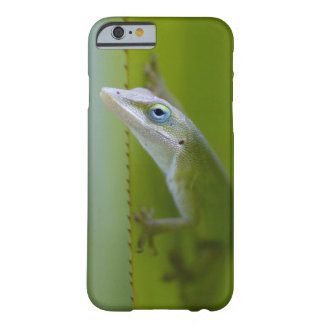 Un anole verde es un lagarto arbóreo funda de iPhone 6 barely there