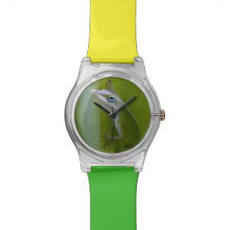 Un anole verde es un lagarto arbóreo relojes