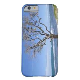 Un árbol adornado con las boyas viejas en la playa funda de iPhone 6 barely there