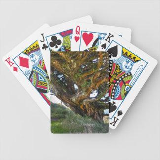 Un árbol al revés cartas de juego