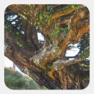 Un árbol al revés pegatina cuadrada