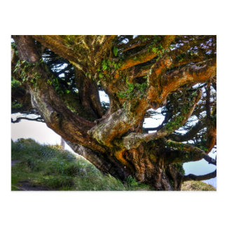 Un árbol al revés tarjeta postal