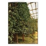 Un árbol de limón, Limone, Garda, lago de, vintag  Felicitación