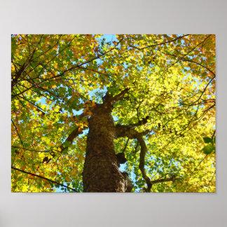 Un árbol de muchos colores poster