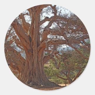 Un árbol de Warka Pegatina Redonda
