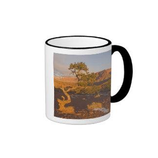 Un árbol del osteosperma del Juniperus del enebro  Tazas De Café