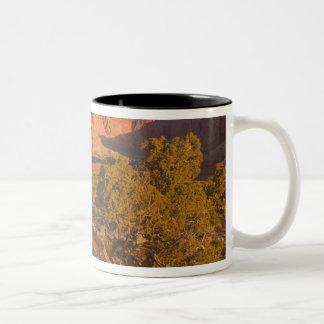 Un árbol del osteosperma del Juniperus del enebro  Taza De Café