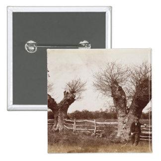 Un árbol del seto, 1852 (impresión del albumen) pin cuadrada 5 cm