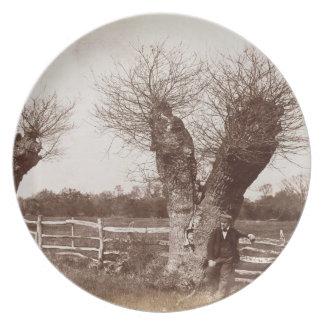 Un árbol del seto, 1852 (impresión del albumen) platos de comidas