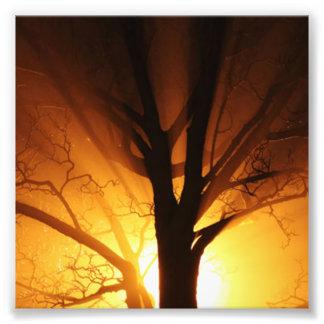 Un árbol desnudo en la puesta del sol cojinete