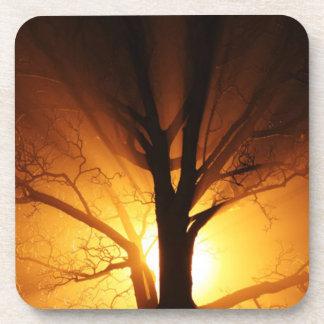 Un árbol desnudo en la puesta del sol posavasos de bebidas