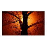 Un árbol desnudo en la puesta del sol tarjetas personales
