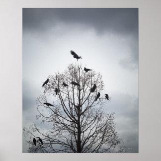 Un árbol en el cual muchos cuervos tienen resto póster