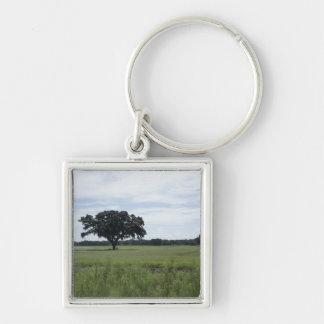 Un árbol llavero personalizado