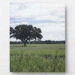 Un árbol placa de plastico