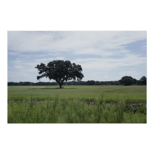Un árbol póster