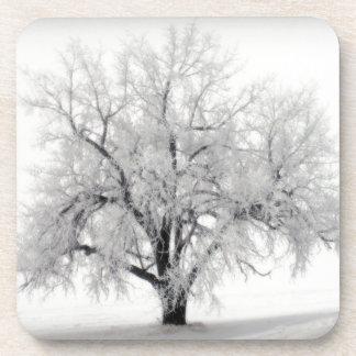 Un árbol solitario de Frostry en la pradera de Dak Posavasos De Bebida